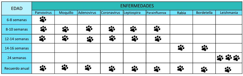 Vacunas Gatos Calendario.Vacunacion Centro Veterinario Animalia
